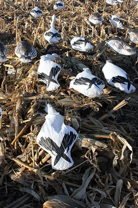 gooseview layout blinds bdd snow goose