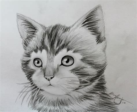 Drawings Of Animals by Animal Drawing The Kitten By Lucahennig On Deviantart