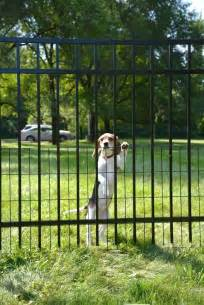 puppy guard fence 9 best puppy fence images on cubs doggies and pup