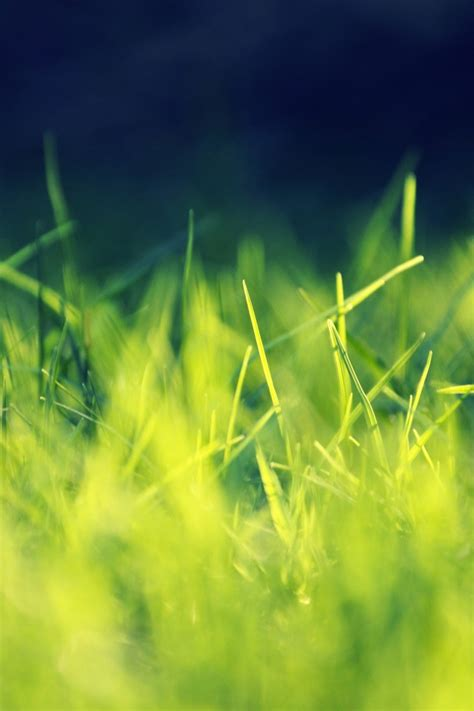 iphone wallpaper green grass green grass simply beautiful iphone wallpapers