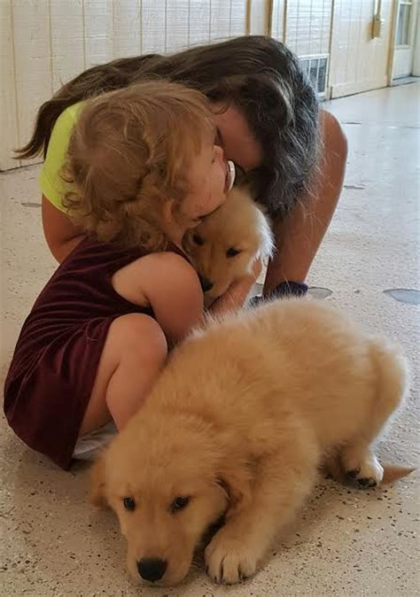 best crate for golden retriever how to crate a golden retriever puppy breeds picture