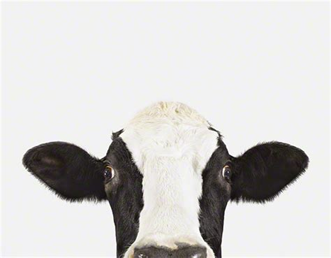 printable animal art cow pictures of farm animals the animal print shop