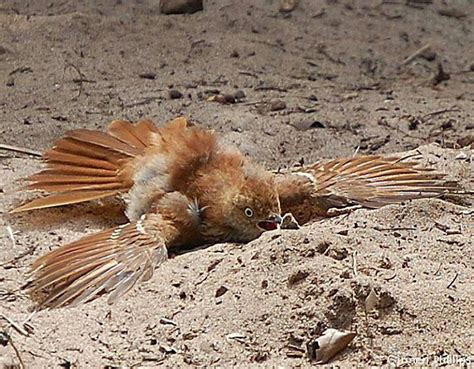 bird taking dust bath birds and butterfly s pinterest