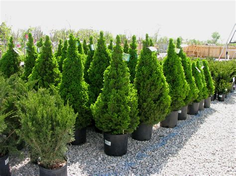 top 28 shrub trees pictures why plant trees 171