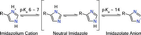 Histidine Protonation by Biochemistry Histidine Protonation Biology Stack Exchange