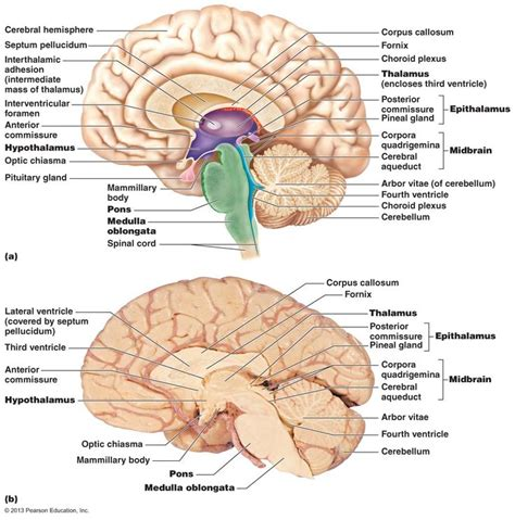 section 170 c 2 b of the internal revenue code 17 best images about central nervous system on pinterest
