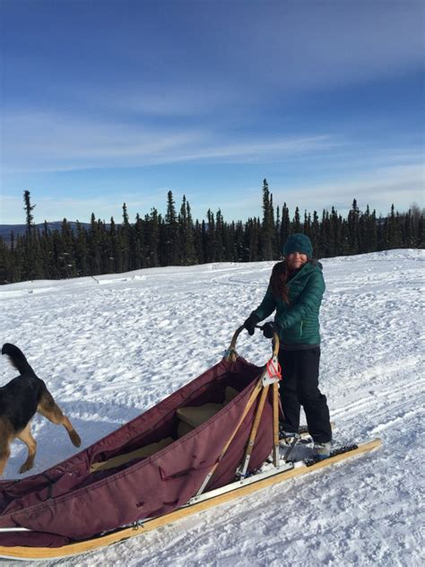fairbanks sledding fairbanks alaska sled day tour guided alaska dogsledding day trip