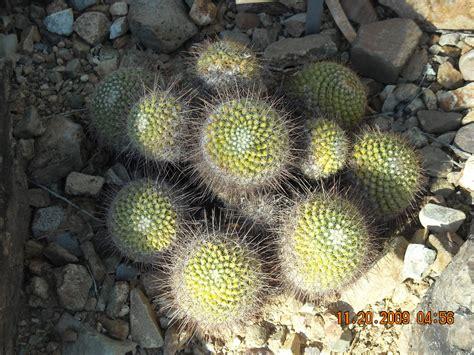 desert plants desert plants beauty alone desert plants desert and plants desert plants