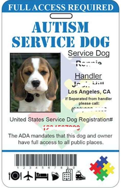 service dogs for autism the curious of autism service dogs changing impacts of animal therapy
