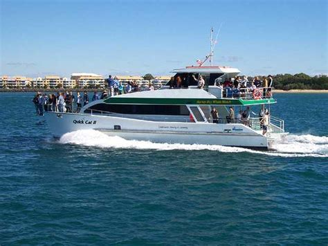 charter boat hervey bay hervey bay whale watch weddings in hervey bay fraser