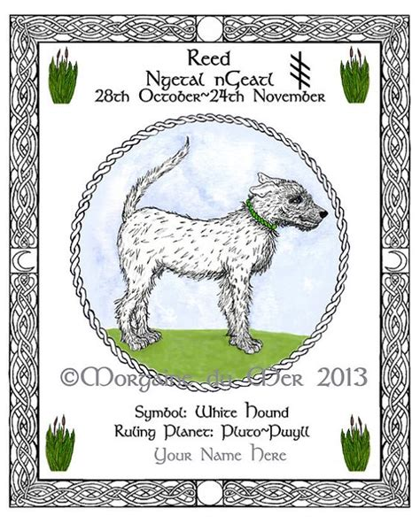Celtic Tree Calendar White Hound Reed Celtic Tree Calendar Lunar By