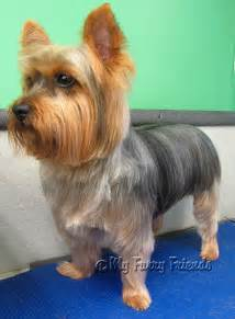 how to cut a yorkie s hair at home short yorkie haircuts pictures only new style for 2016 2017