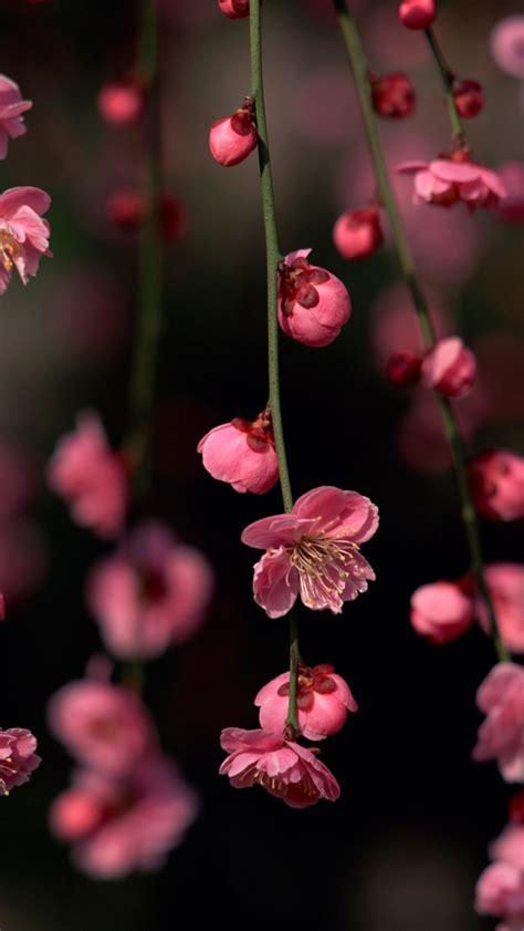 pink spring flowers iphone  wallpaper