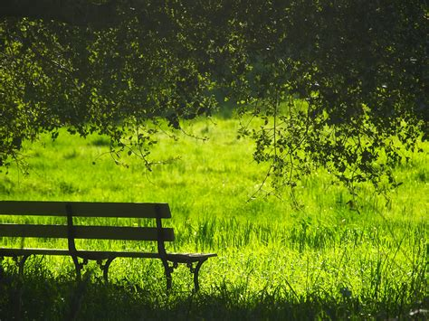 images landscape tree nature forest bench