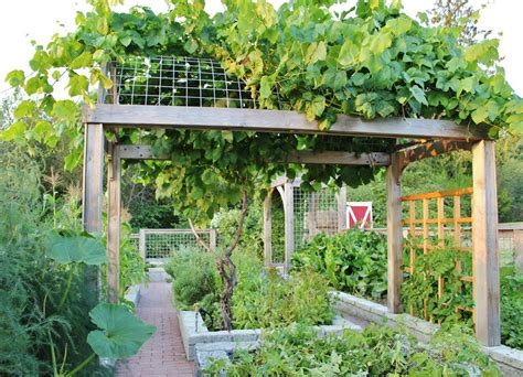 Vegetable Garden Trellis Designs Chic Grape Arbor Method Seattle Farmhouse Landscape