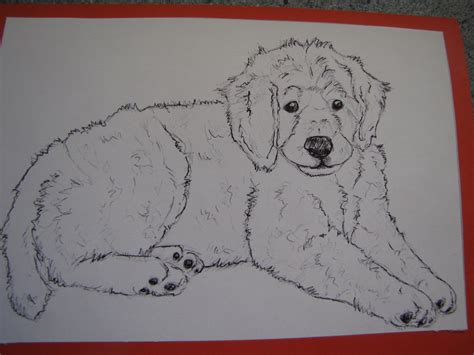 doodle dogs drawing how to draw goldendoodle