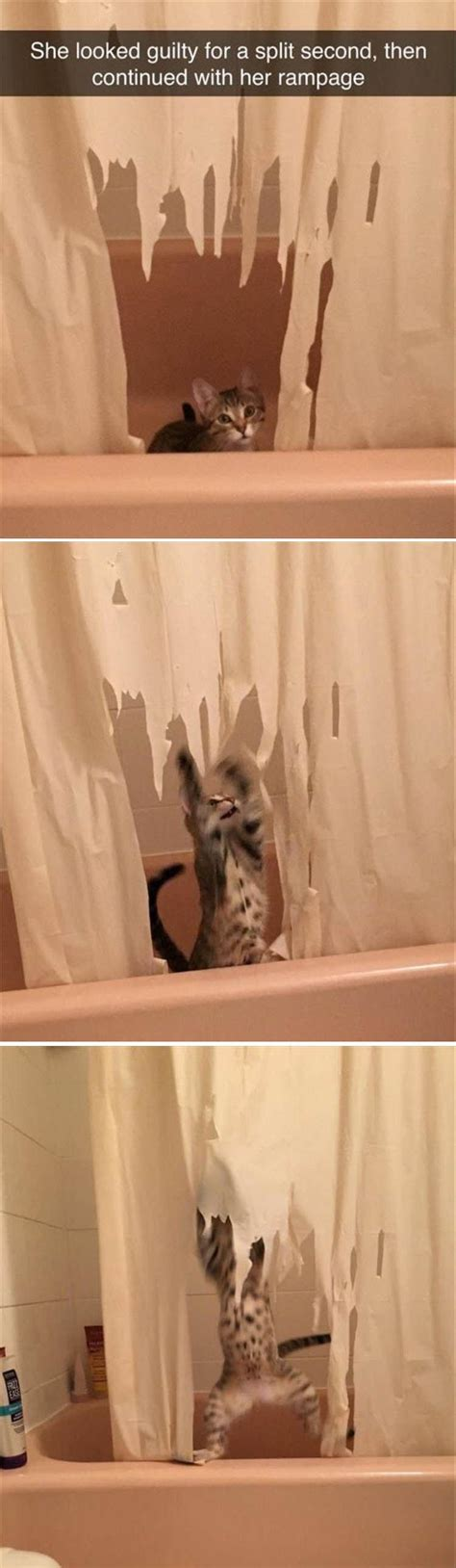 ridiculous shower curtain funny animal pictures of the day 19 pics funny animals
