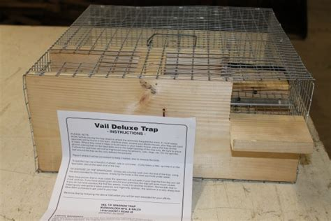 House Sparrow Trap Plans Deluxe Repeating Sparrow Starling Trap Usa Amish Made