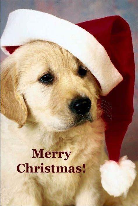 christmas  latest christmas  greeting cards