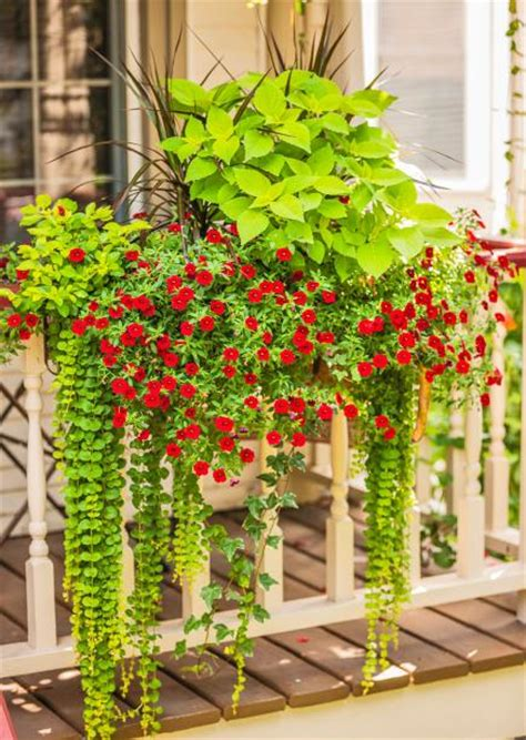 beautiful container gardens 35 beautiful container gardens midwest living