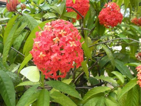 Garden Flowers In India Garden Flowers Flowering Plants Kerala India