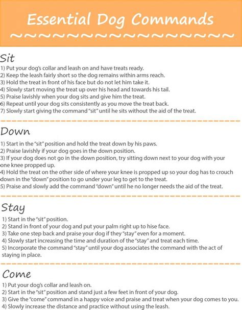 puppy commands 25 best ideas about commands on stuff and