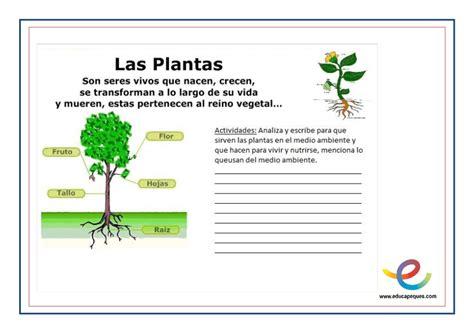 Resumen Y Sus Partes by Las Plantas Y Sus Partes 191 Cu 225 L Es La Funci 243 N Principal De