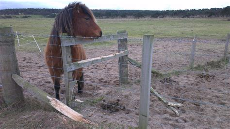 Why Do Horses Crib by Stop Fence By Horses Crib Biting Or Chewing