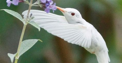 17 best images about albino animal and plant on