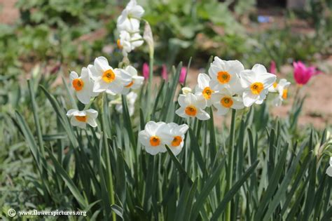 flowers photos 28 images photos of flowers photos of narcissus flower picture 28
