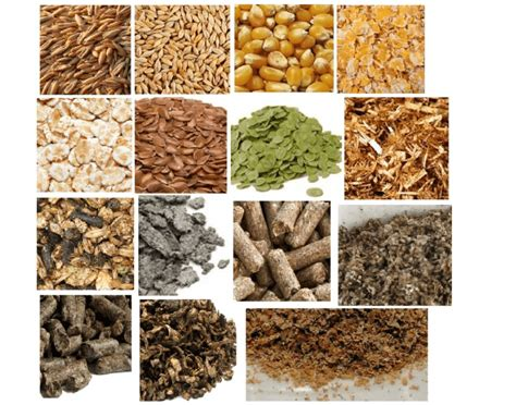different types of horse feed