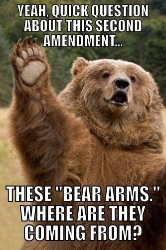 Bears Memes - the right to bear arms funny bear meme my animal rocks
