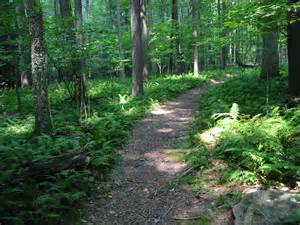 Hiking Trails In Friendly Hocking The Chalets