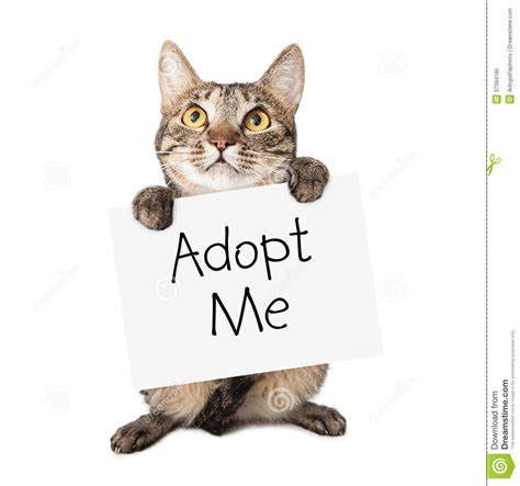 free adoption near me adopt a cat for free near me cats