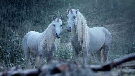 imágenes de unicornios verdaderos f 243 sil revela que los unicornios existieron el ma 241 ana de