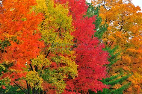 autumn color colors of fall wallpapers 68 wallpapers 3d wallpapers