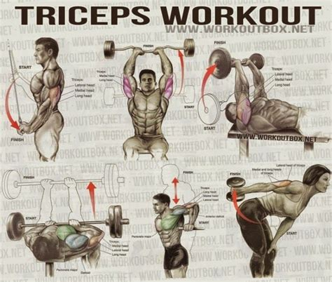 the best triceps exercises for mass all bodybuilding workouts workout chart