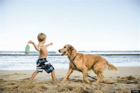 play with dogs 50 summer activities that burn 50 calories huffpost