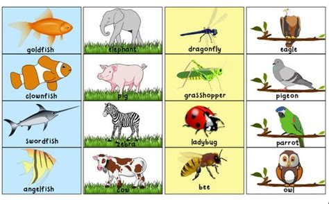 printable animal pictures for sorting toddler sorting activity free printable friday the