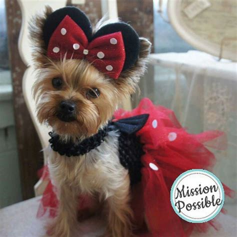 yorkie costumes minnie mouse yorkie yorkie for the taps and polka dots
