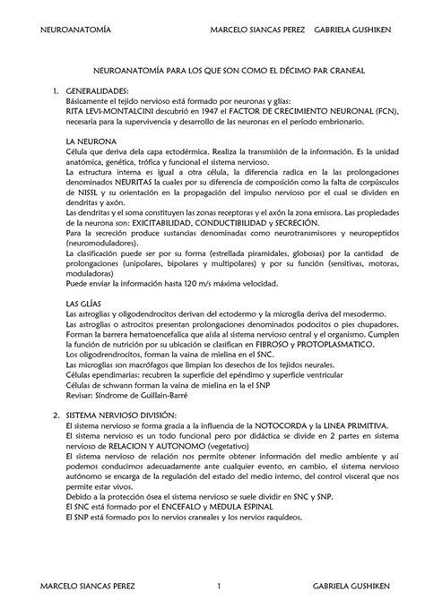 Neuroanatomia basica Siancas - Gushiken by MARCELO SIANCAS