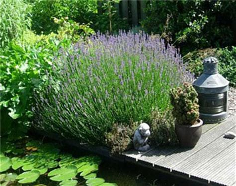 giardini rocciosi in ombra piante perenni per giardino roccioso