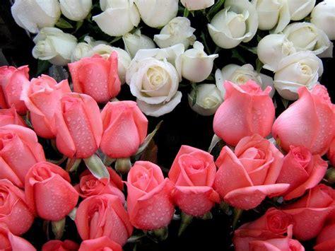 imagenes lindas flores com deus e a verdade a arte de viver bem