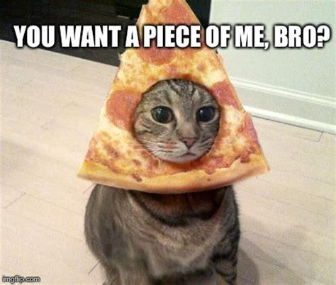 Lesbian Cat Meme - pizza cat meme you want a piece of me bro image