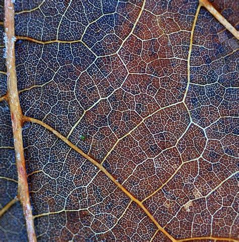 geometric pattern found in nature patterns in nature art natural pattern geometry
