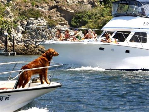 boat harbour dog beach full steam ahead captain l a unleashed los angeles times