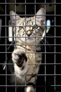 nieuwe kat in huis nieuwe kat in huis dierenarts dierenkliniek