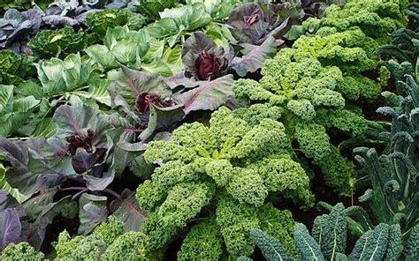 grow  eat dont  weeds    veg plot