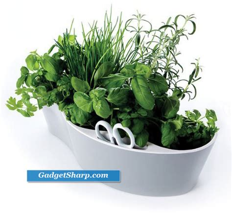 herb garden indoors best indoor herb garden kits gadget sharp