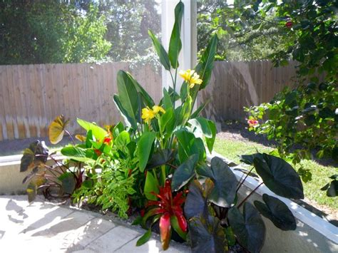 best 25 tropical pool landscaping ideas on